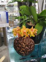 オレンジ 切花.JPG