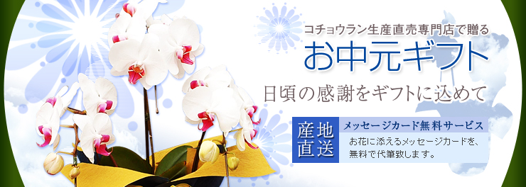 胡蝶蘭のナフト